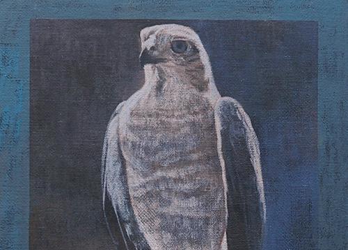 Still Life - Falcon